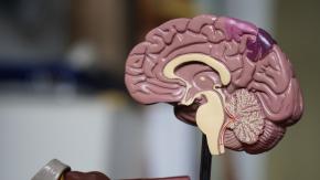 Starters & Plenaries for AQA GCSE Psychology: Paper 1 (Cognition & Behaviour)