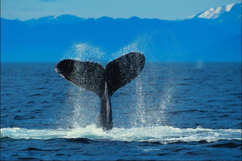whale biker content material effect essay